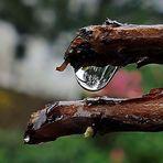 der spiegelnde Regentropfen
