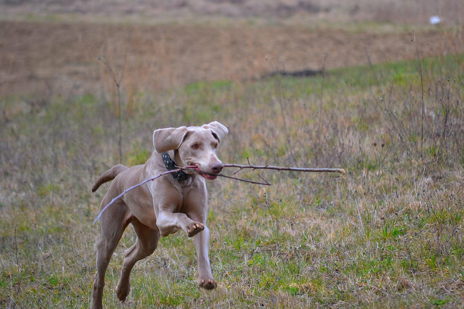 Der Springende Hund