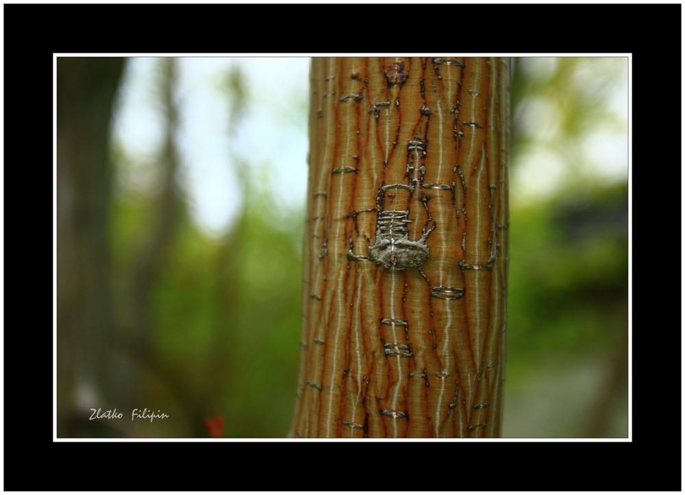 * Der Stammbaum *