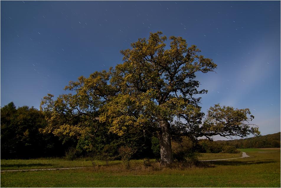 Der starke Baum
