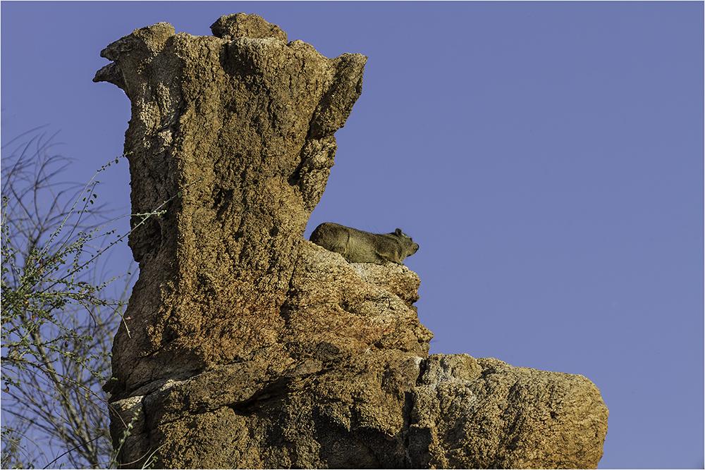 Der Stein Stiefel mit dem Klippschliefer