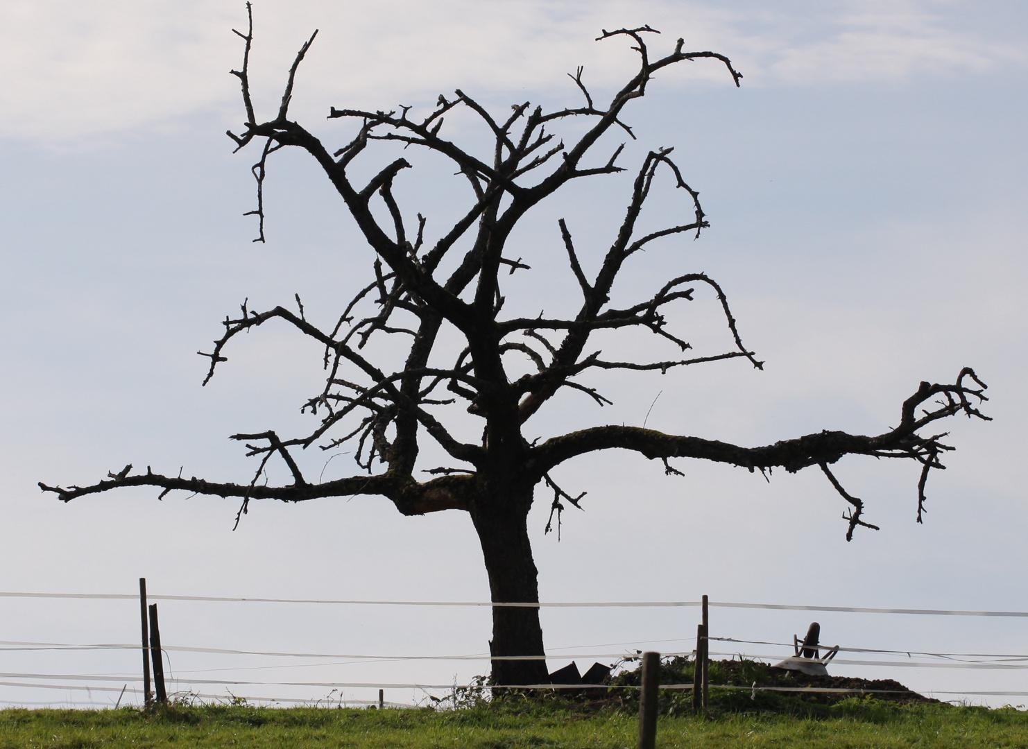 Der sterbende Baum zu Muggard