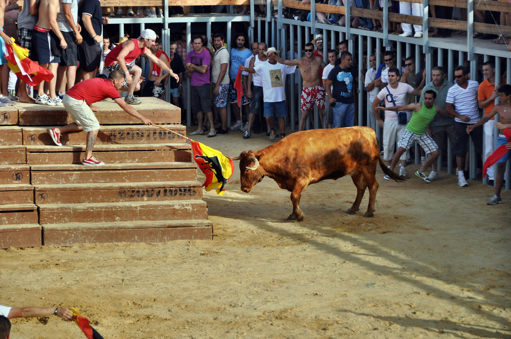 Der Stier wird animiert