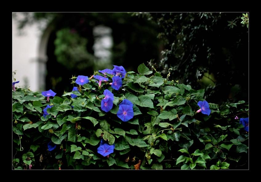 ...der stille Garten...