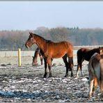 Der Stolz der Pferde