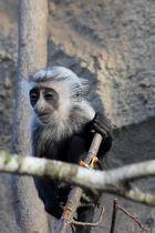 Der Stolz des Zoos (2015) (II)