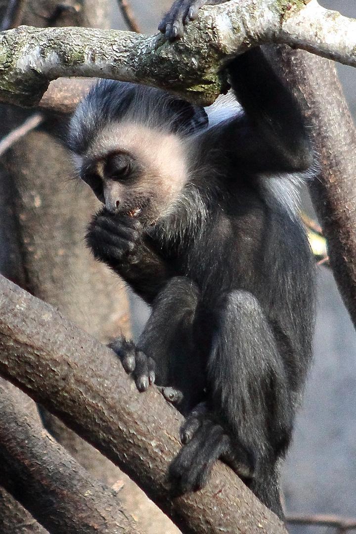 Der Stolz des Zoos (2015) (IV)
