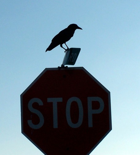 Der STOP Vogel oder ein Vogel-Stop?