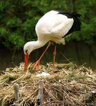 """Der Storch bringt die """"Babys"""""""