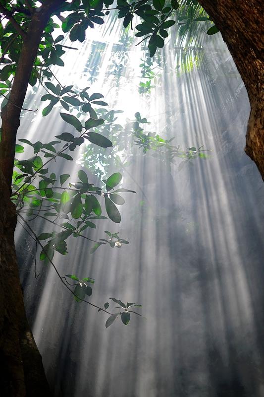 Der strahlende Regenwald