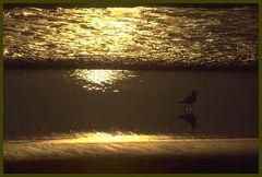 Der Strandläufer, die Zweite