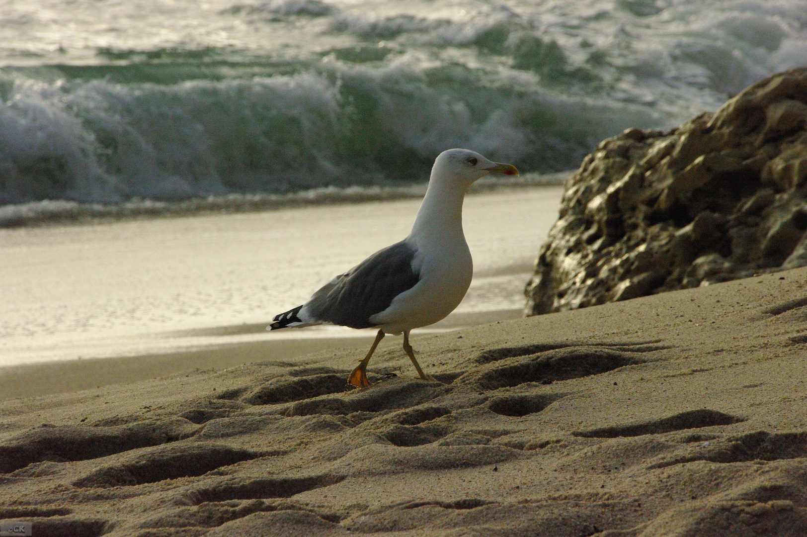 der strandspaziergang