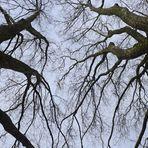 Der Streit der Bäume