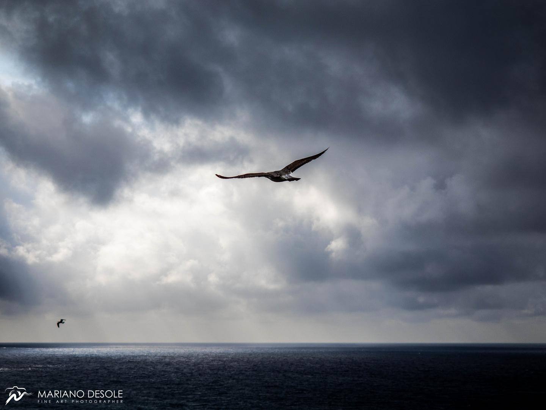 Der Sturmflug