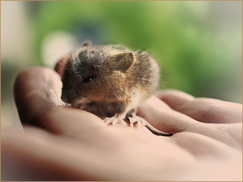 *Der süße Mäuserich*