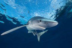 der sympathische Blauhai...