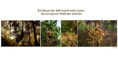Der Tag der Erde - der Wald
