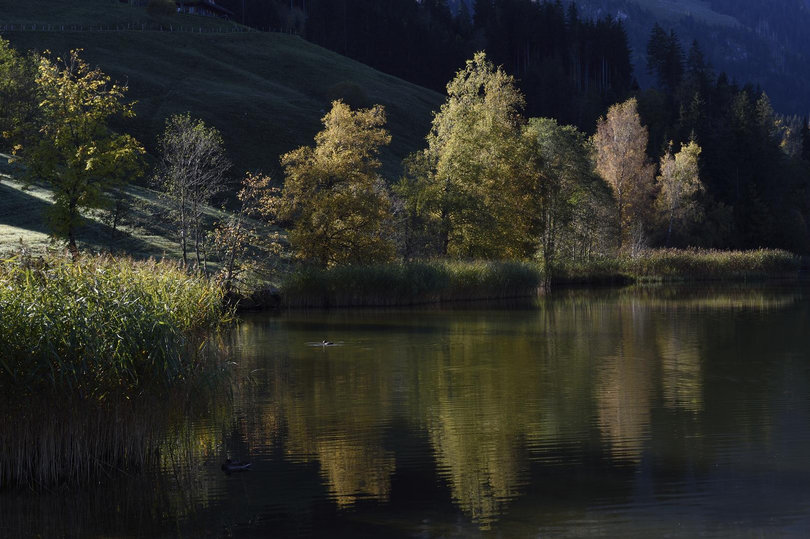 Der Tag erwacht ... am Schwarzsee