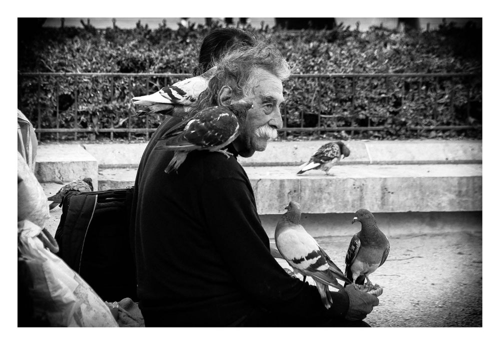 Der Taubenflüsterer~