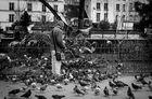 Der Taubenmann von Notre-Dame