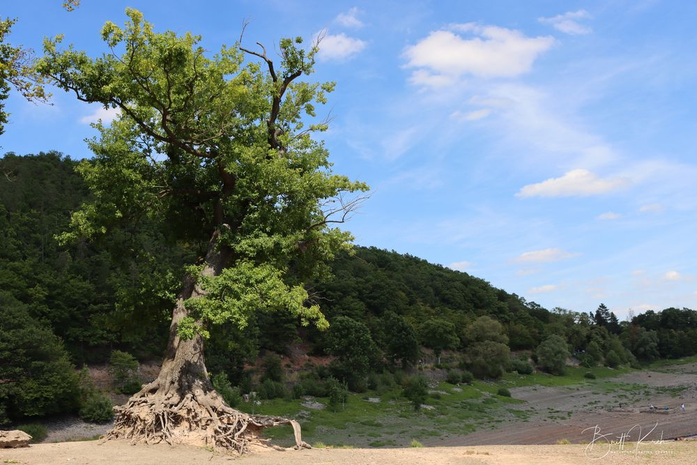 """""""Der Taucherbaum"""""""