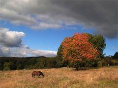 Der Taunus im Herbst