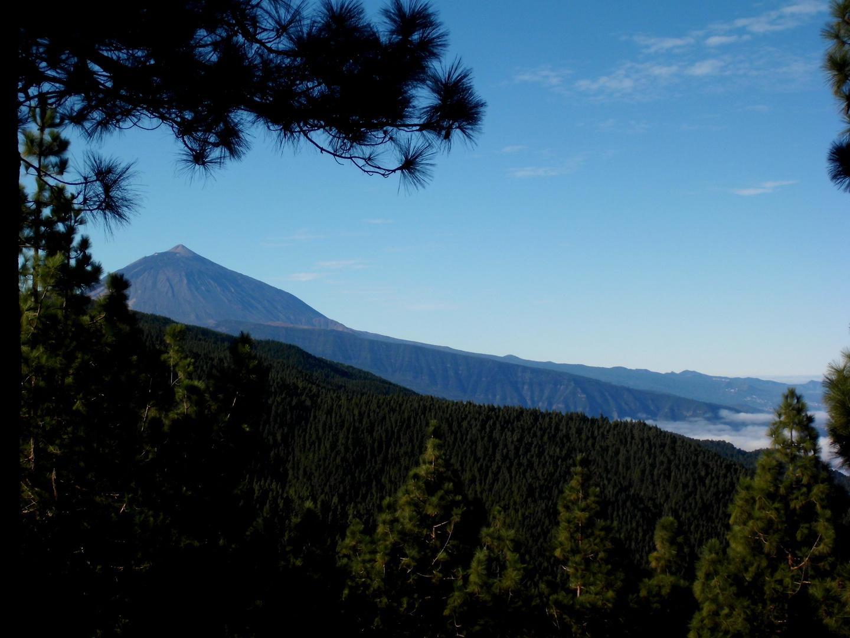 Der Teide und der Esperanzawald