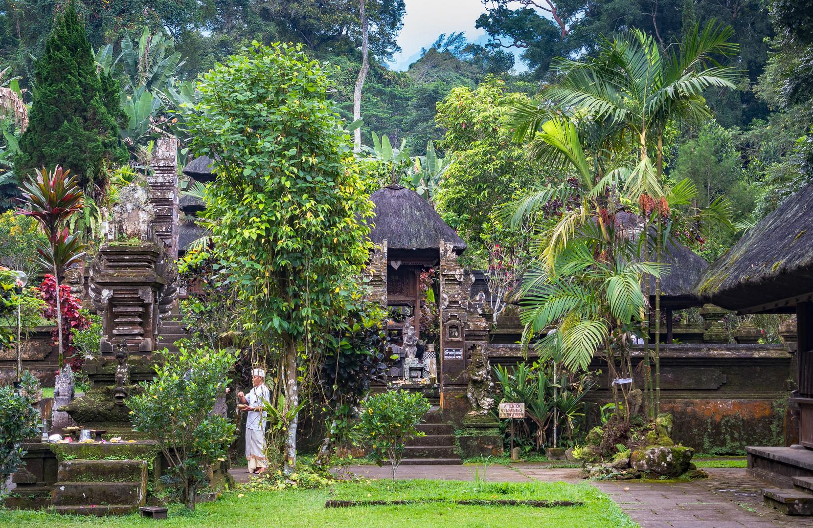 Der Tempel im Regenwald
