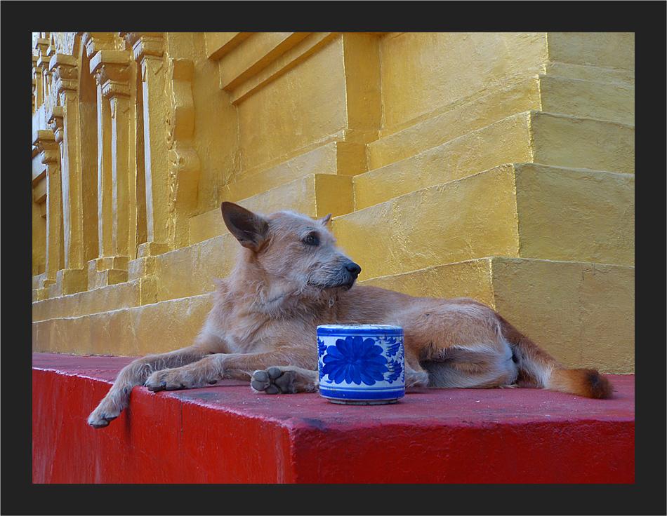 Der Tempelhund