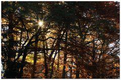 Der tiefe Sonnenstand im November...
