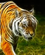 Der Tiger brennt