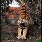 der Tiger in dir ...