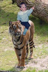 Der Tigerbändiger