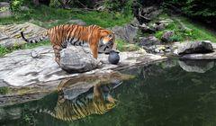 der Tigerball