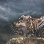 Der Tod breitet seine Flügel aus