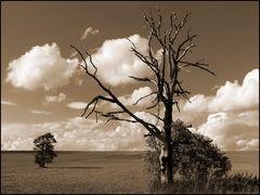 Der Tod des Baumes