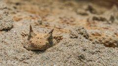 Der Tod im Sand