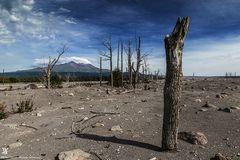 Der Tote Wald