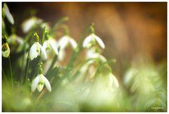 Der Traum vom Frühling...