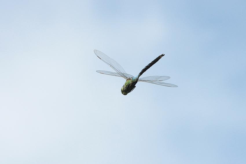Der Überflieger