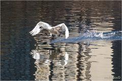 Der über's Wasser lief ;-))
