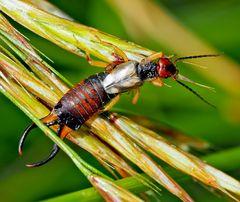 Versch. Insekten