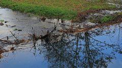 Der untere Biberdamm von flußaufwärts gesehen und an der Spiegelung sieht man die...