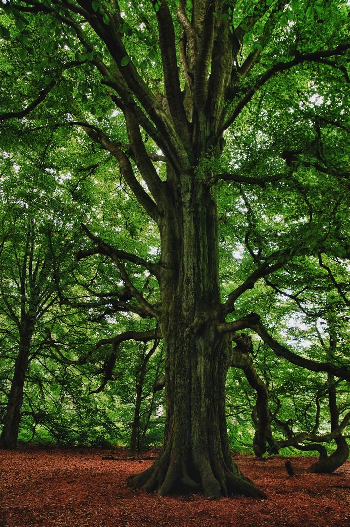 Der Uralte Baum