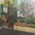 Der urige Vorgarten