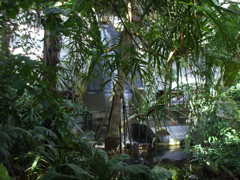 der urwald foto  bild  pflanzen pilze  flechten bäume