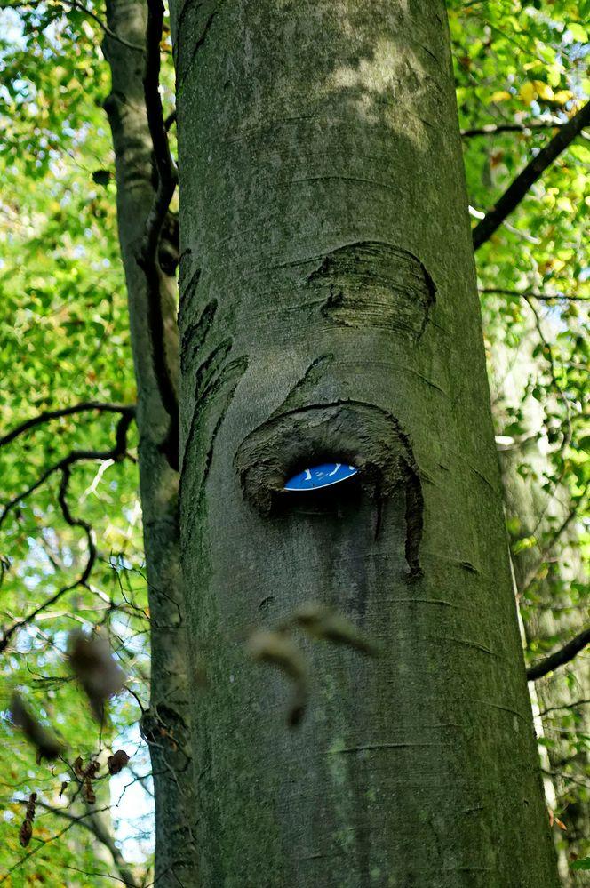 der urwald überwuchert alle zeichen der zivilisation foto
