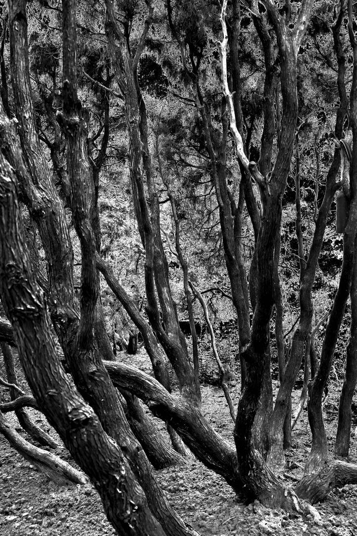 Der Urwald von Ellerhoop