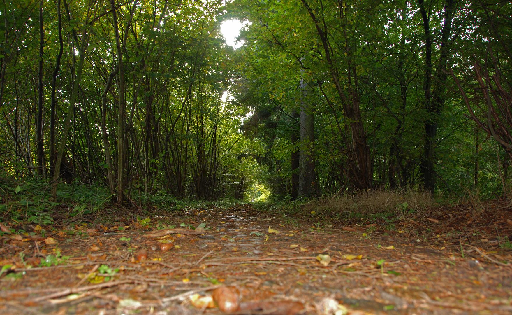 der verlassene Weg