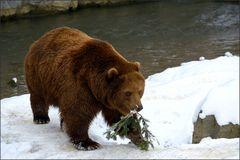 Der verspielte Bär [5] ...